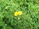 oca20flowers